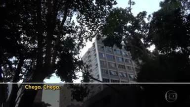 Moradores da capital protestam contra derrubada de árvores - Elas ficavam num terreno tombado pelo patrimônio histórico desde 1995