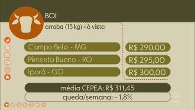Confira os preços do boi gordo - Na sexta-feira, em Campo Belo, Minas Gerais, a arroba à vista foi negociada por R$ 290. Em Pimenta Bueno, Rondônia, R$ 295. Em Iporá, Goiás, R$ 300. A média Cepea fechou a semana em R$ 311,45, queda de 1,8%.