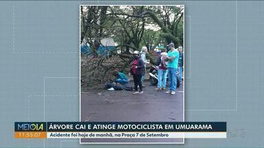 Mulher fica ferida ao ser atingida por árvore - Acidente aconteceu na manhã desta segunda-feira (7) em Umuarama.