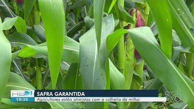 Agricultores estão otimistas para colheita de milho deste ano - Mês de junho aumenta procura por comidas de milho.