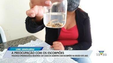 Vigilância Epidemiológica registrou 230 acidentes com escorpiões na região em 2021 - Confira a reportagem exibida pelo Link Vanguarda.