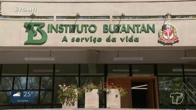 Testes com a vacina Butanvac são iniciados no Brasil - A vacina brasileira utiliza técnica de cultivo em ovo.