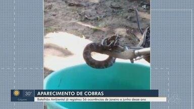 Batalhão Ambiental já registrou 56 aparecimento de cobras de janeiro a junho, em Macapá - Batalhão Ambiental já registrou 56 aparecimento de cobras de janeiro a junho, em Macapá