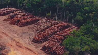 Madeira de desmatamento ilegal é retirada de Floresta Nacional e transportada à luz do dia - O Fantástico revela uma nova denúncia de desmatamento ilegal. O caso, que acontece em Brasília, chegou ao Ministério Público.
