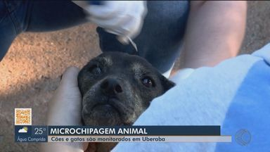 Cães e gatos podem receber microchips de graças em Uberaba - Iniciativa é do Departamento de Controle de Zoonoses e moradores da cidade podem levar os pets para receber sistema de monitoramento.