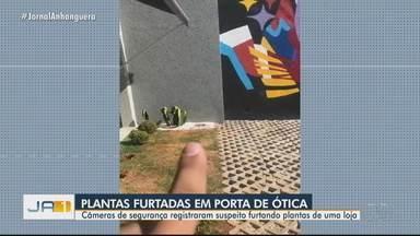 Câmeras de segurança registraram homem furtando plantas de uma loja em Goiânia - Segundo a proprietária, loja foi inaugurada há apenas um mês.