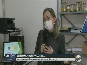 São Carlos realiza ação sobre prevenção e controle da leishmaniose - Doença é transmitida pelo mosquito palha e atinge pessoas e animais.