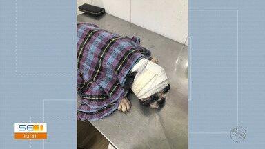 Animais são vítimas de maus-tratos em Boquim - Animais são vítimas de maus-tratos em Boquim.