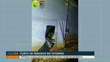 PM flagra furto de frangos e ração em Vitorino - Quatro pessoas foram flagradas levando as aves e ração de um aviário.