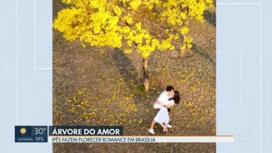 Fotógrafo lança busca por casal que viveu romance sob ipê amarelo - História termina de forma surpreendente.