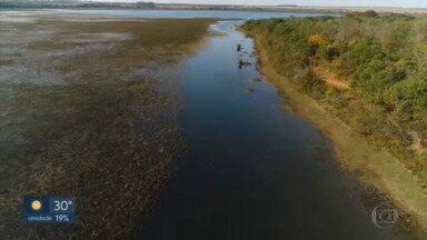 Reportagem especial mostra por que o Cerrado é chamado de berço das águas - Águas que nascem na região abastecem todo o Brasil e chegam a outros países