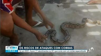 Veja o que fazer em caso de ataque de cobras - Confira mais notícias em g1.globo.com/ce