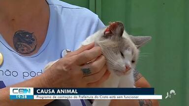 Programa de castração de animal da prefeitura do Crato está sem funcionar - Confira mais notícias em g1.globo.com/ce