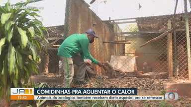 Animais do zoológico de Goiânia precisam de cuidados especiais por conta do calor - Veja qual tratamento eles estão recebendo esta época do ano.