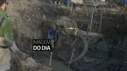 RELEMBRE: Jornal das Dez (2015) - Esqueleto de um mamute é encontrado por um fazendeiro nos Estados Unidos