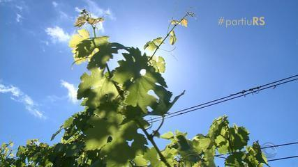#partiuRS: conheça a rota de Vinhos da Campanha, no RS
