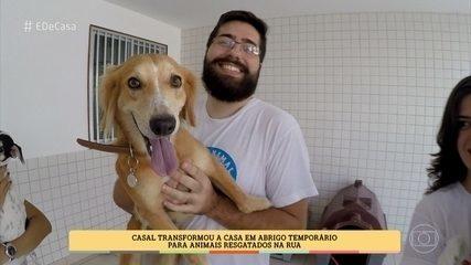 Casal transfroma casa em lar temporário para animais resgatados