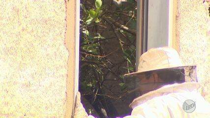 Homem morre após receber mais de 500 picadas de abelha em Ribeirão Preto