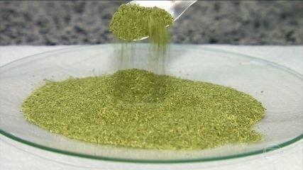 Moringa oleífera é planta rica em vitaminas e minerais