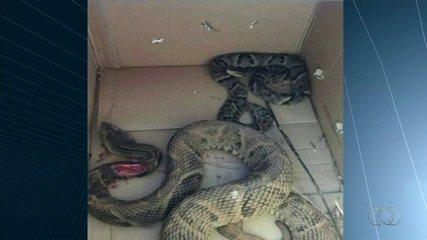 Cadela salva dois irmãos de picada de cobra em Anápolis, GO