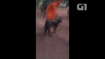 Bombeiros resgatam cão que caiu em canal na Zona Sul de Macapá
