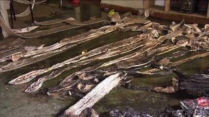 Aumenta o número de crianças mortas no incêndio criminoso em MG