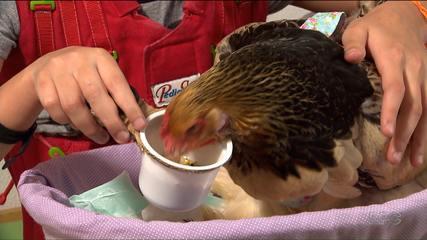 Centro de recuperação neurológica usa galinha para terapia assistida com crianças