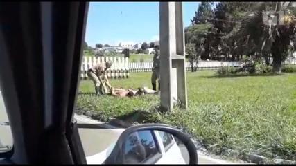 Presos escapam da cadeia pública em Ponta Grossa
