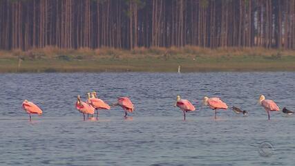 Pesquisadores estudam espécies de aves do Parque Nacional da Lagoa do Peixe, no RS