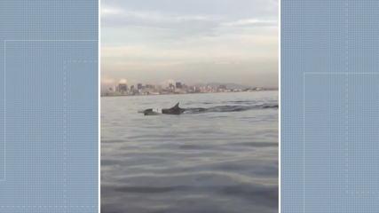 Golfinhos são flagrados em praia de Niterói, RJ
