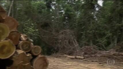 STF julga ações que questionavam artigos do Código Florestal
