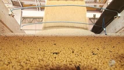 Agricultores comemoram supersafra de soja em nove municípios do oeste da Bahia