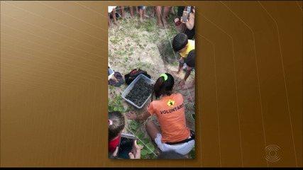 Nascimentos de tartarugas com monitoramento da ONG Guajiru é registrado em João Pessoa