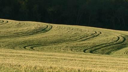 Alta do trigo atinge valor histórico