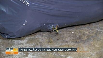 Moradores reclamam de infestação de ratos em condomínios