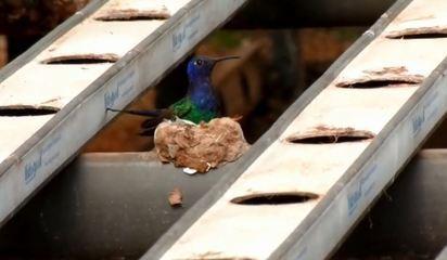 Ninhos de aves são observados em áreas urbanas