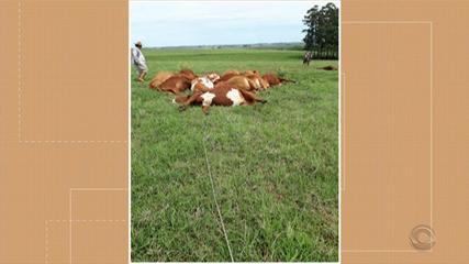 Dezoito vacas morrem eletrocutadas em Santo Antônio das Missões por conta do temporal