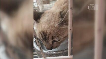 Filhote de gato é encontrado dentro de mochila abandonado em rua de Catanduva