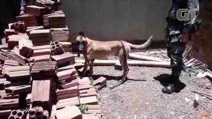 Cão farejador da polícia encontrou as drogas em Palmas