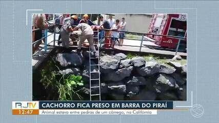 Morador registra resgate de cão preso entre pedras em Barra do Piraí
