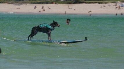 Hoje é dia de Surfe: tem até pra cachorro!