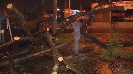 Chuva forte provoca queda de árvores em Rio Preto