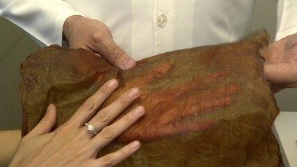 Startup de biotecnologia produz tecido para roupas feito a partir de bactérias