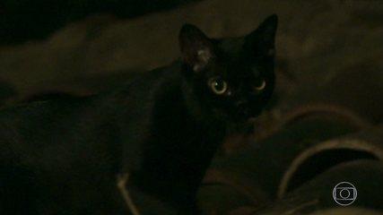 León se transforma em homem misterioso para salvar Gabriel
