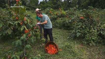 Parte 2: Moacyr visita Fazenda de Guaraná