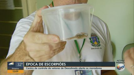 Centro de Controle de Vetores de Descalvado alerta moradores sobre risco de escorpiões
