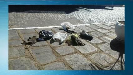 Onze gatos são encontrados mortos em Serra Redonda