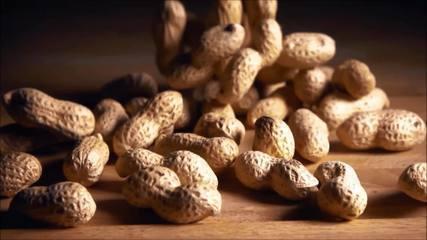 Produção de amendoim gera receita de mais de um R$1 bilhão