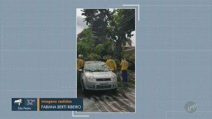 Chuva causa queda de árvores em Campinas