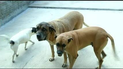 Número de casos de maus tratos de animais cresce no Tocantins